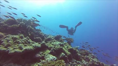 diver-and-fish1