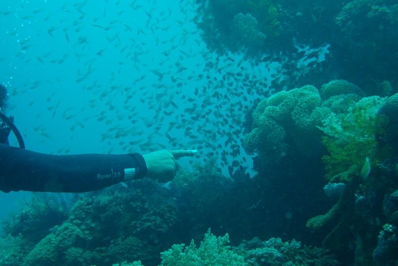 fish-loloda1