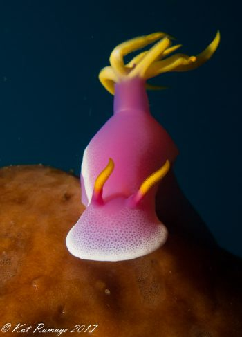 Pink & Yellow Nudi sitting on top of a sponge