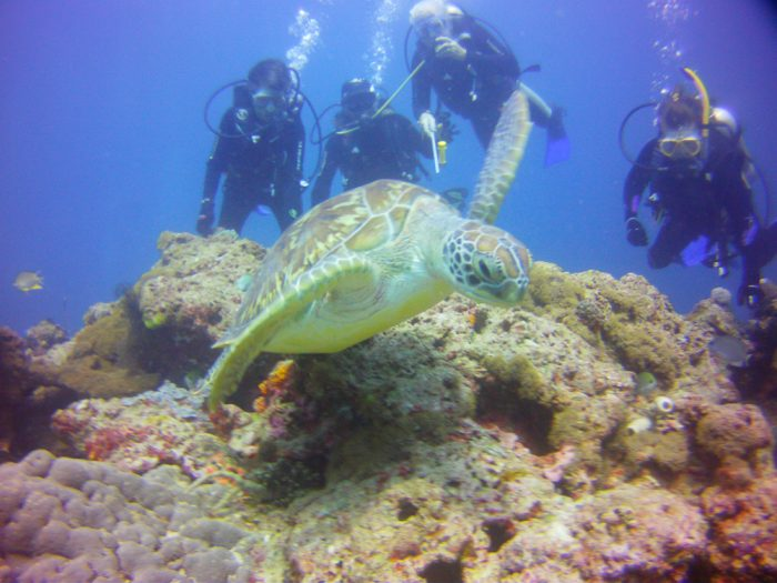 A turtle entertains our divers & guide