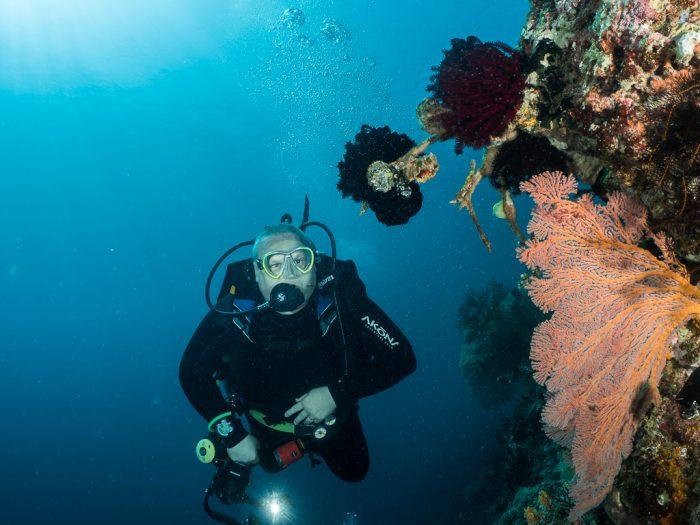 Box Reef, Menjangan, Bali, Indonesia, wall dive