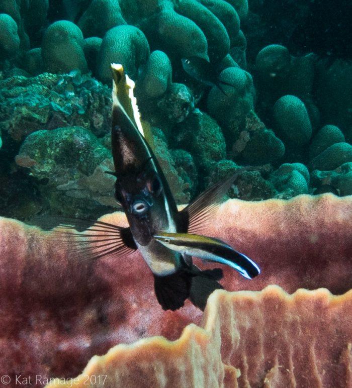 Coral Bommie, Pemuteran, Bali, Indonesia, UW photos