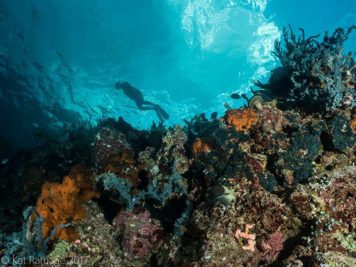 Snorkeler, Underwater Caves, Menjangan, Bali, Indonesia