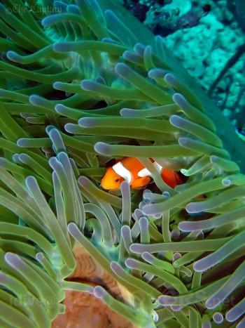 bali-pemuteran-diving-sea-rovers-menjangan2