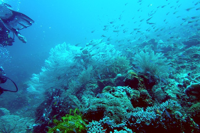 soft-coral-loloda