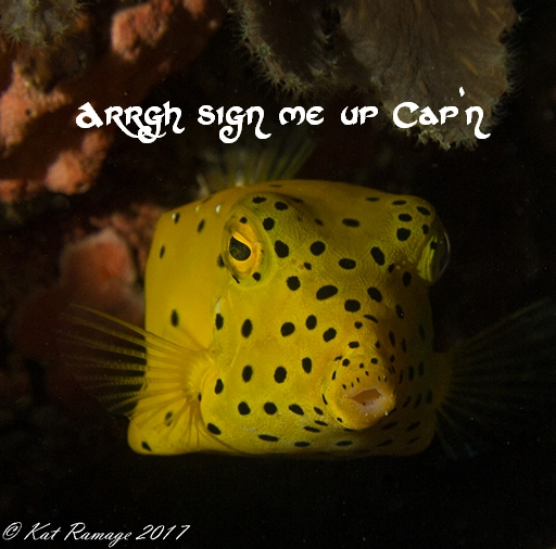 Grab a Free copy of our Ebook on diving NW Bali