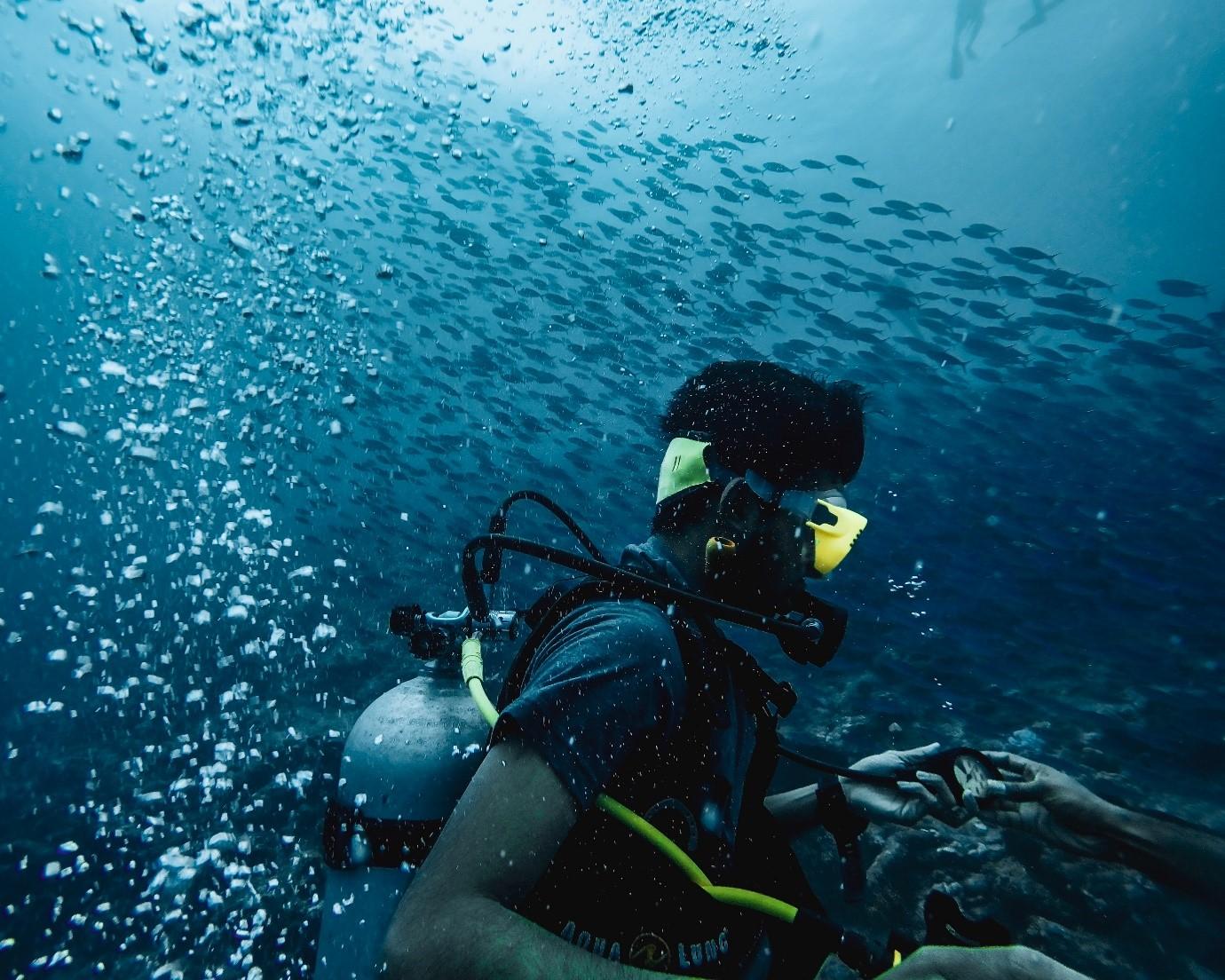 Diver-reef-fish