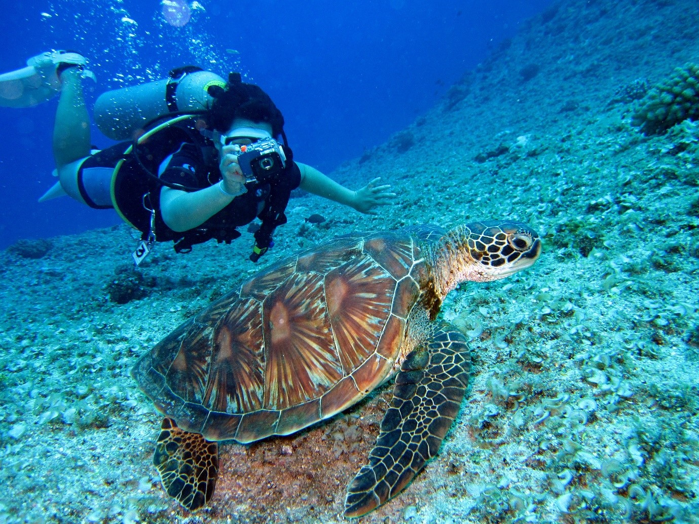 diver-with-turtle